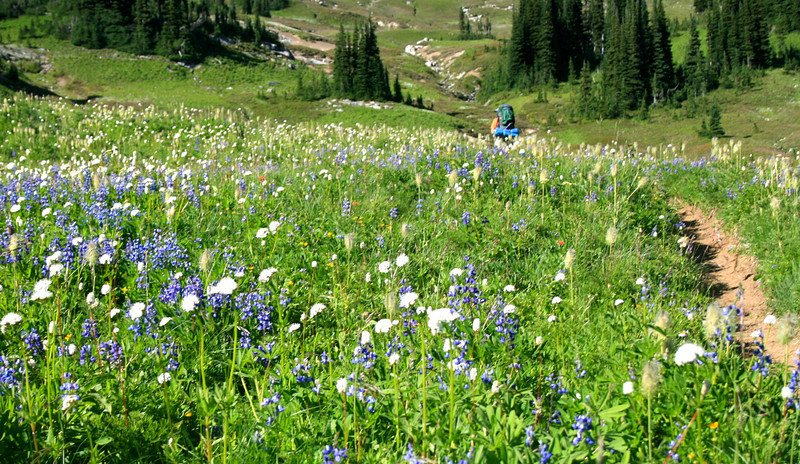 Fields of lupine and anemone.
