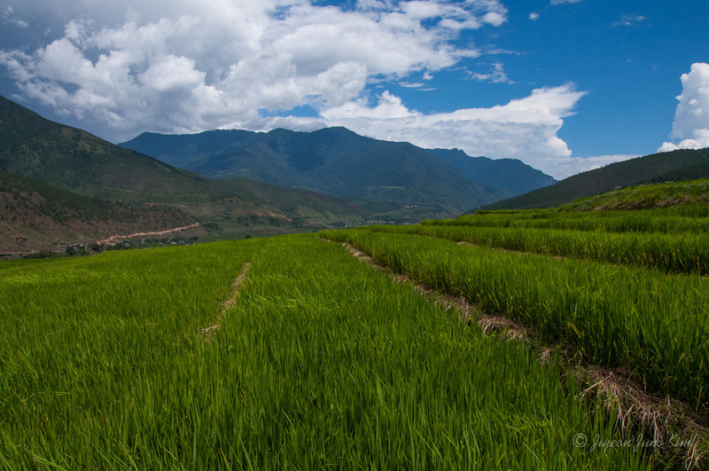 Bhutan-Punakha-8159.jpg