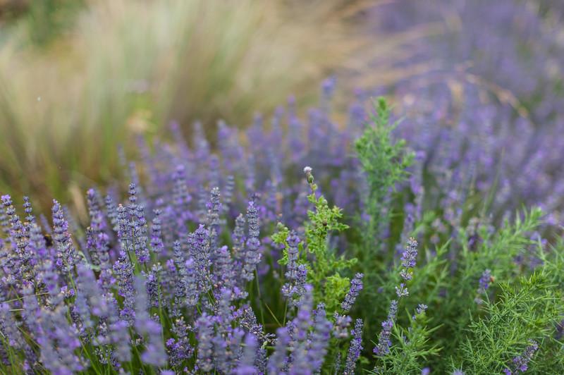 Tasmania_2015_059.jpg