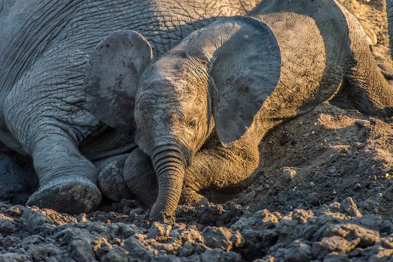 Zuid Afrika 2015 302.jpg