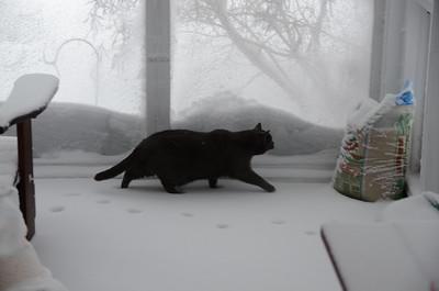 20150127 Snowstorm