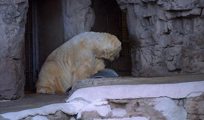 St. Louis Zoo 2003