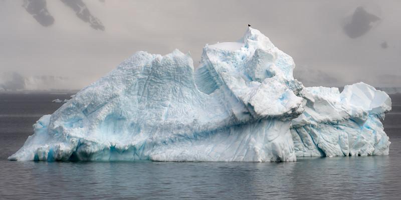 Antarctica-4607.jpg