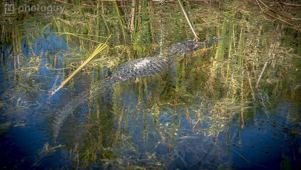 20131218_BIG_CYPRESS_NATIONAL_RESERVE (5 of 8)