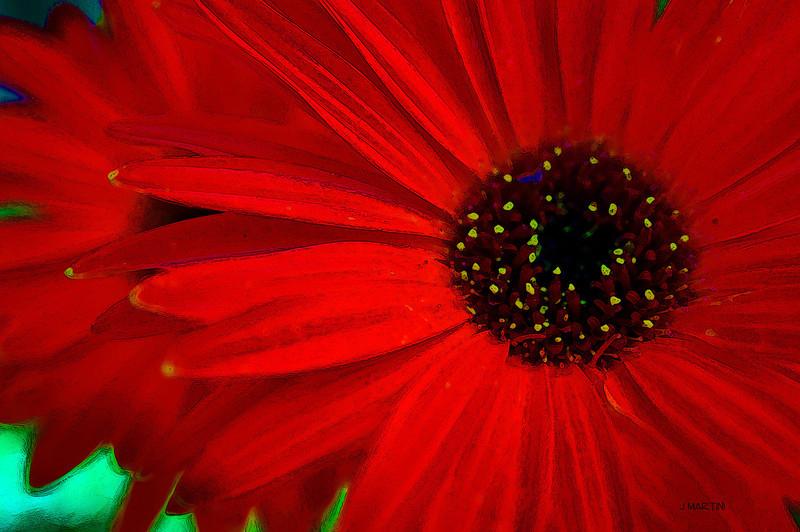 red 8-10-2009.jpg