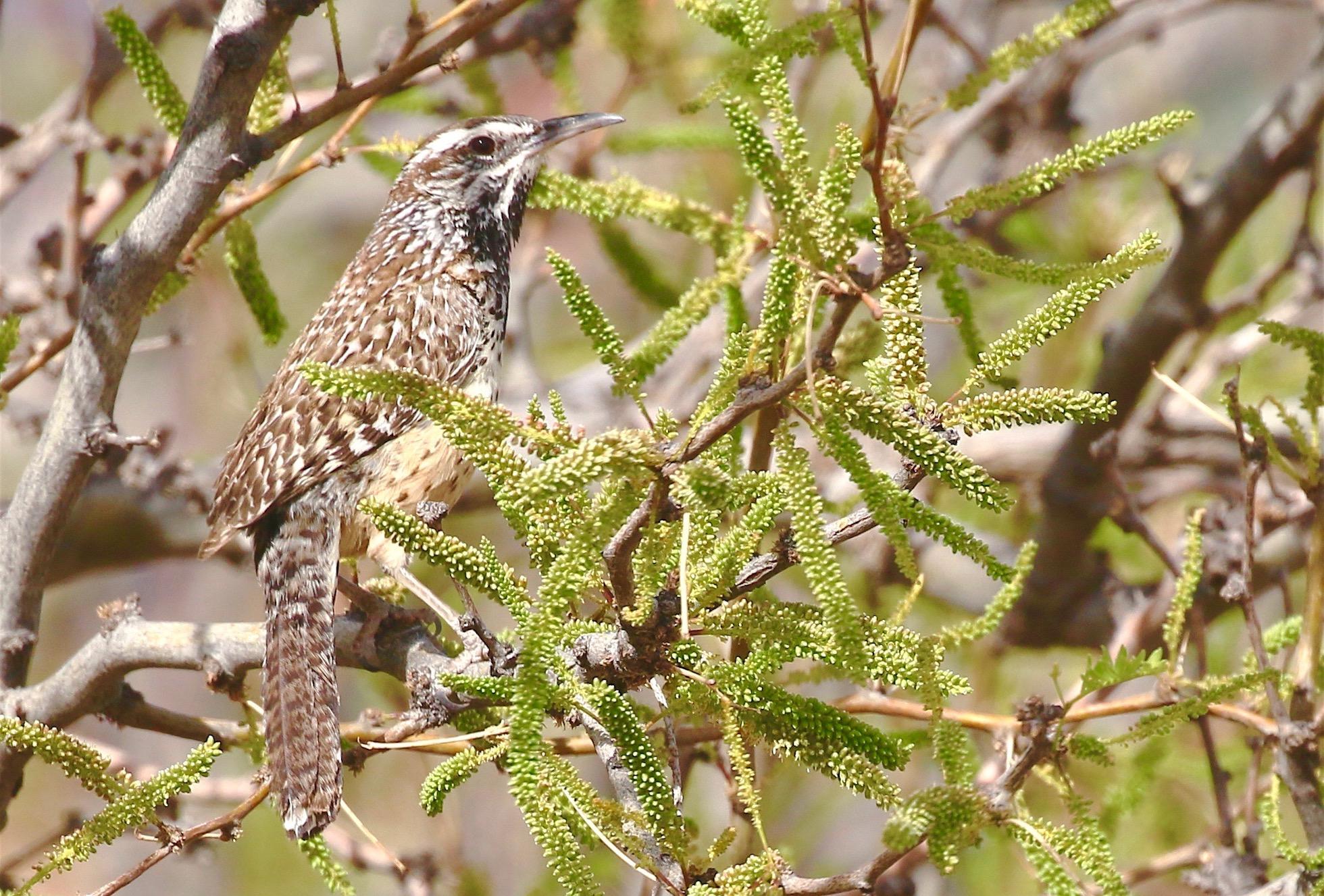Field Guides Birding Tours