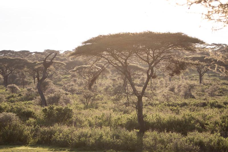 Africa 19 Jpegs_199.JPG