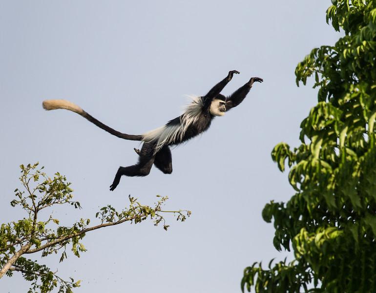 African_Apes_0218_PSokol-1903-Edit.jpg