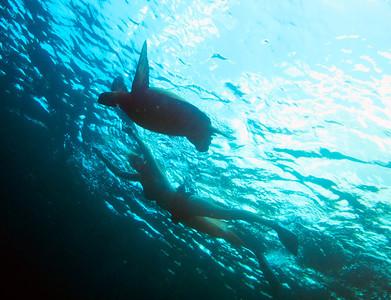 MAUI @ HONOLUA BAY 5-17-14