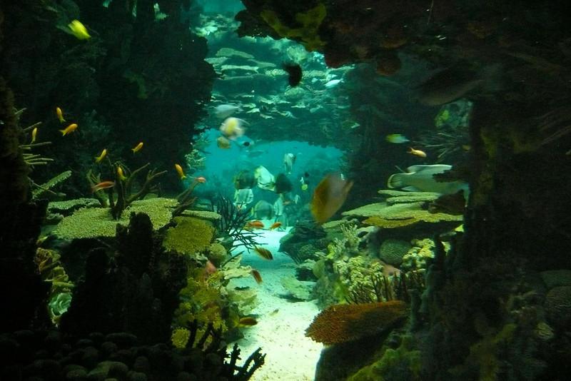Tropical Fish. Oceanário, Parque das Nações, Lisbon