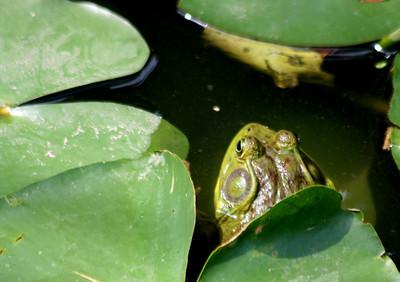 Reptiles-Amphibians