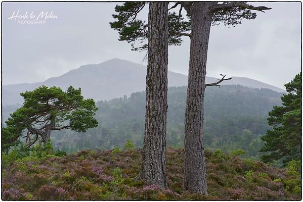 Inverness and Around