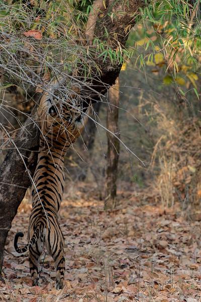 India_April_2019-1249.jpg