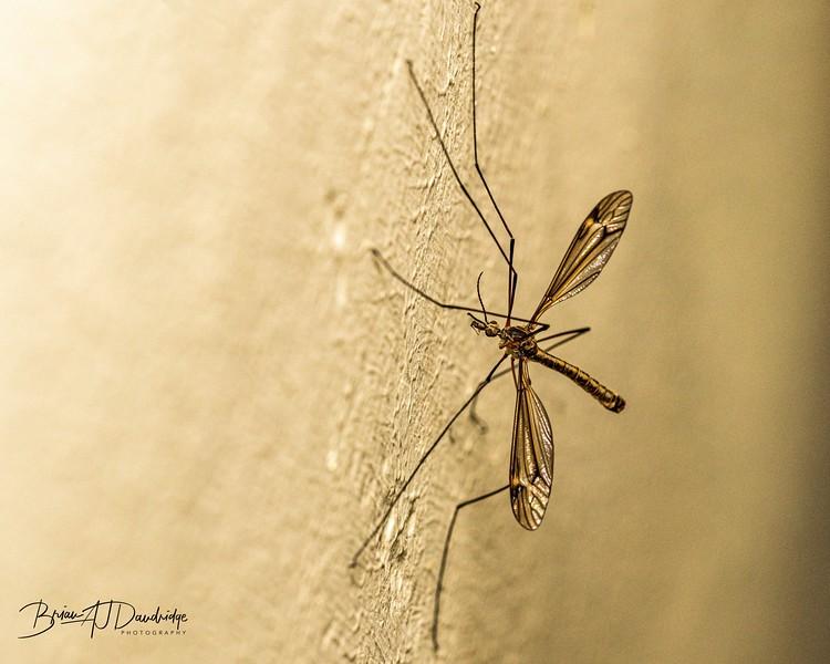 Macro_insect-1551.jpg