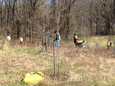 4.8.2017 Tree Maintenance Landing Rd. Rockburn Branch