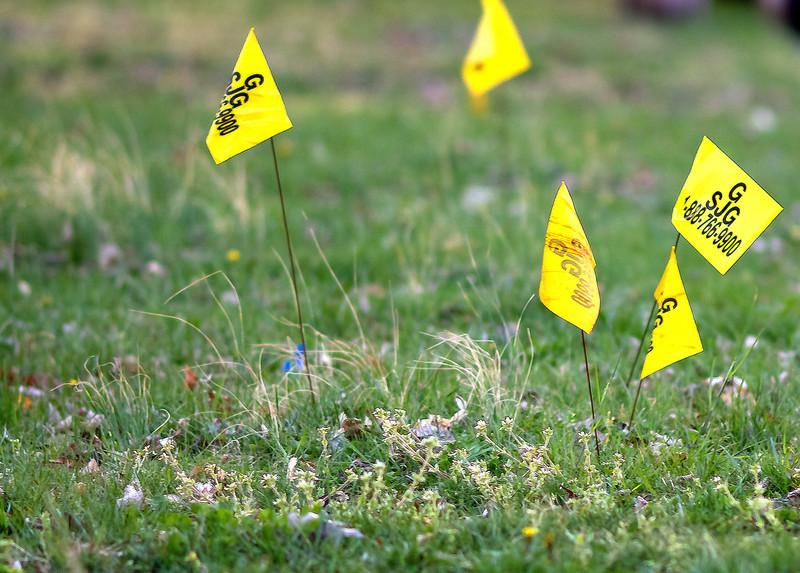 Suburban Weeds