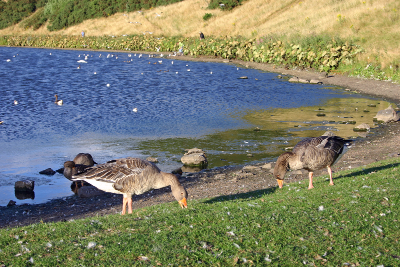 St. Margaret's Loch, Holyrood Park, Edinburgh