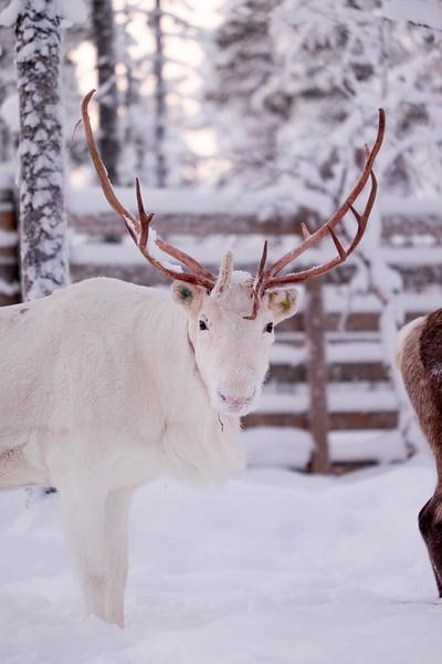 Finland_160117_97.jpg