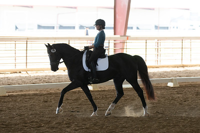 Horse 396