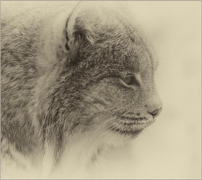 Gail Marchessault - Senior Monochrome Print
