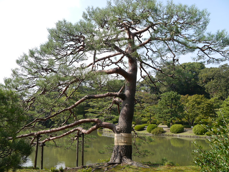 29-Japan2011_2082.JPG