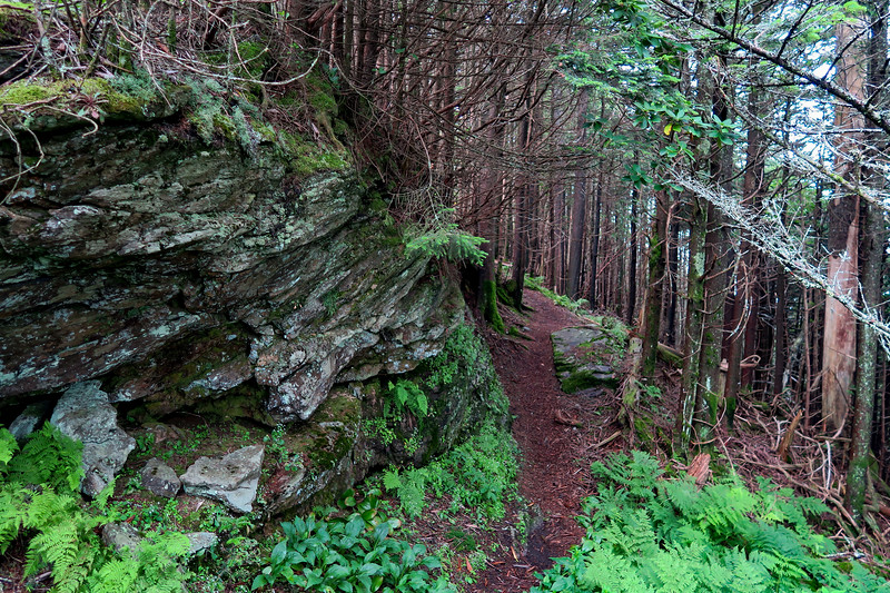 Mountains-to-Sea Trail - 6,150'
