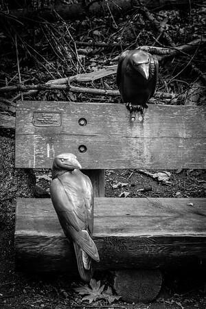 Woodland Park Zoo 2015