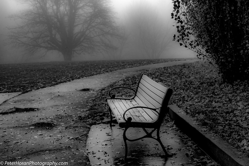 ghost-trees-410-of-14_50639179306_o.jpg