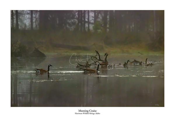 Harriman Wildlife Refuge, Idaho