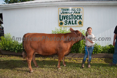 July 17 Market Beef Judging