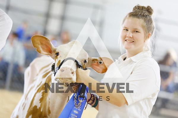 2016 Junior Holstein Showmanship