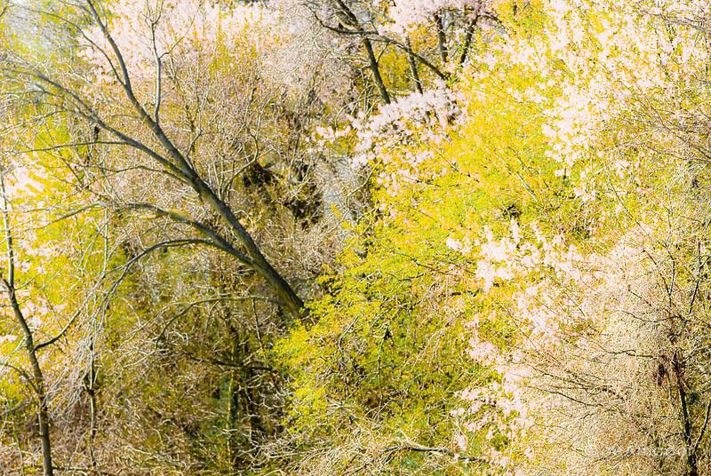 Spring Wild.jpg