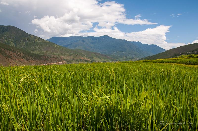Bhutan-Punakha-8145.jpg
