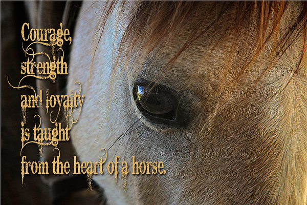 Courage, strength and loyalty are taught from the heart of a horse