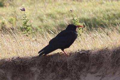 Birds, Isle of Islay, Aug 2011