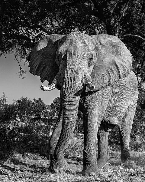 Elephants Botswana-20.jpg