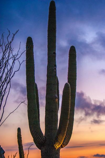 Desert Scenics016.jpg