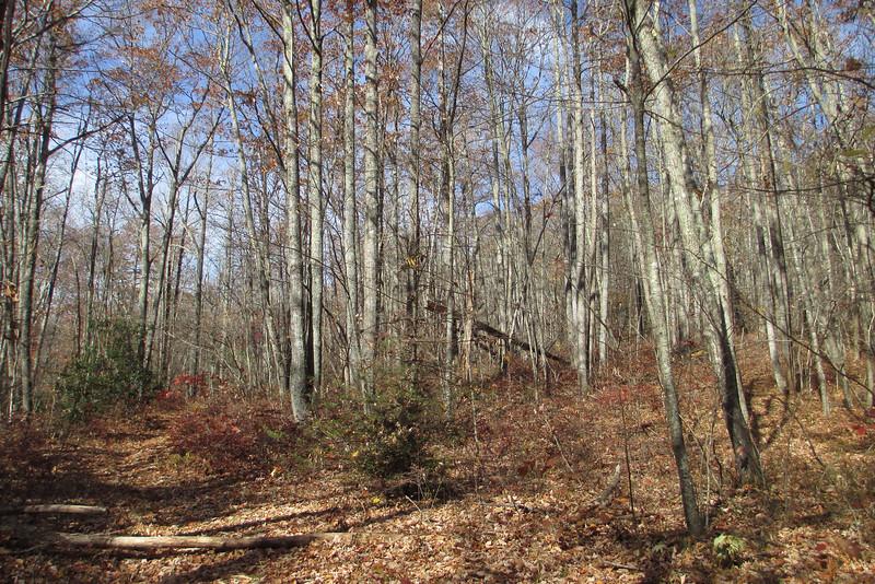 Big Green Trail - 4,000'