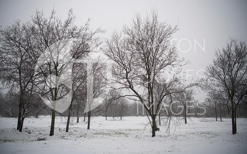 wf_backyard_snow_3.jpg