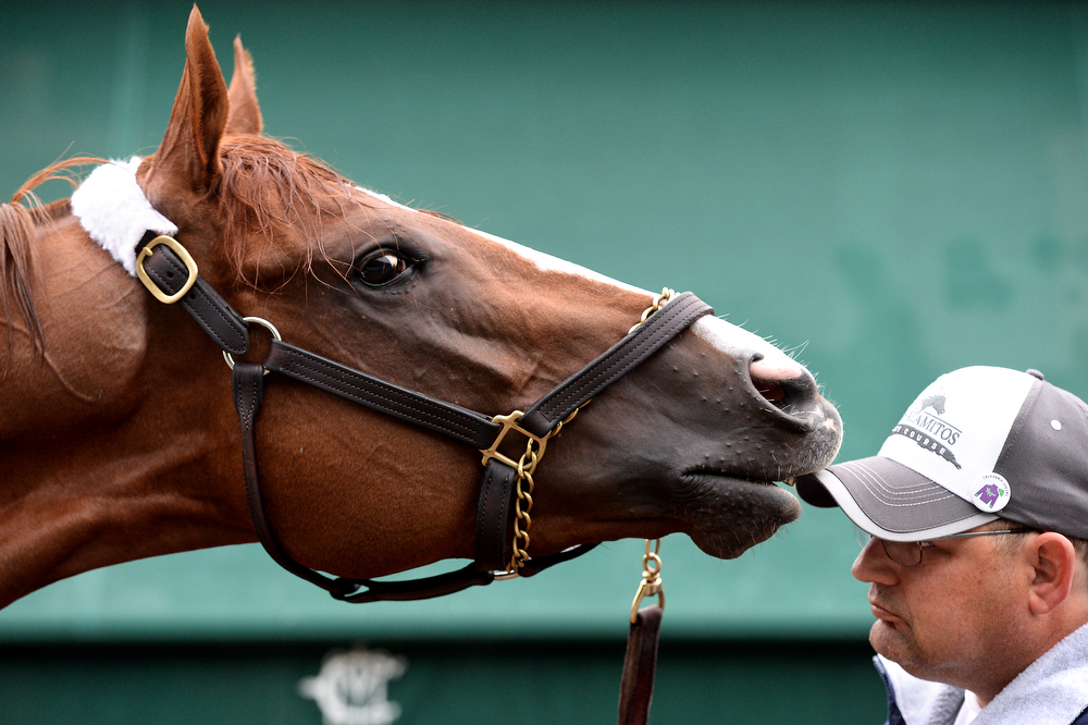 . Kentucky Derby winner California Chrome is bathed in preparation for the 139th Preakness Stakes at Pimlico Race Course on May 15, 2014 in Baltimore, Maryland. (Photo by Patrick Smith/Getty Images)