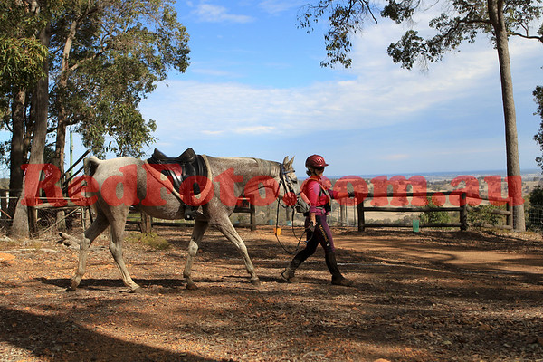 WAERA Marathon Log Fence