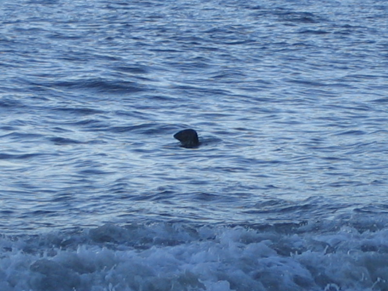 1341 - A seal!!!.jpg
