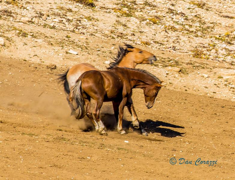 Dualng Mustangs-1aaa.jpg