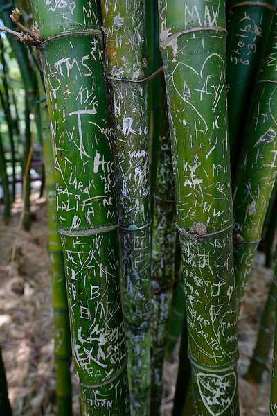 Bamboo Graffiti - Sarasota Jungle Gardens - Sarasota Florida