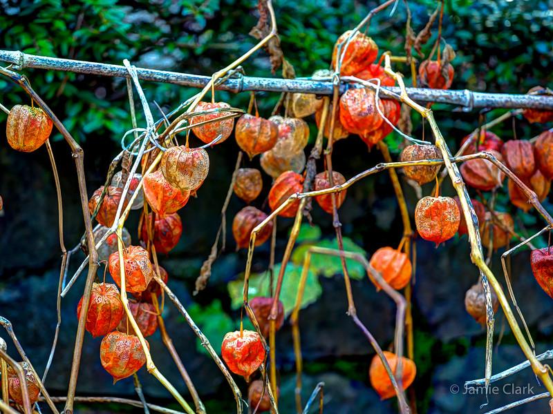 Winter Fruit. Lucerne, Switzerland