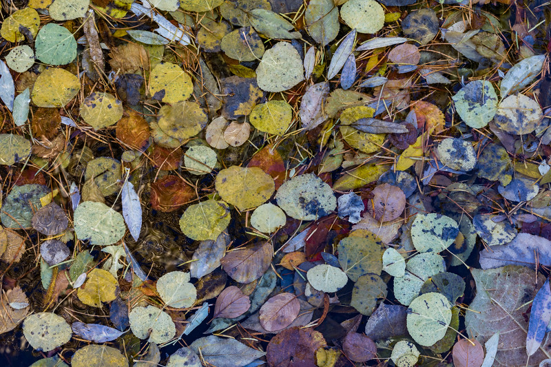 Autumn Mosaic