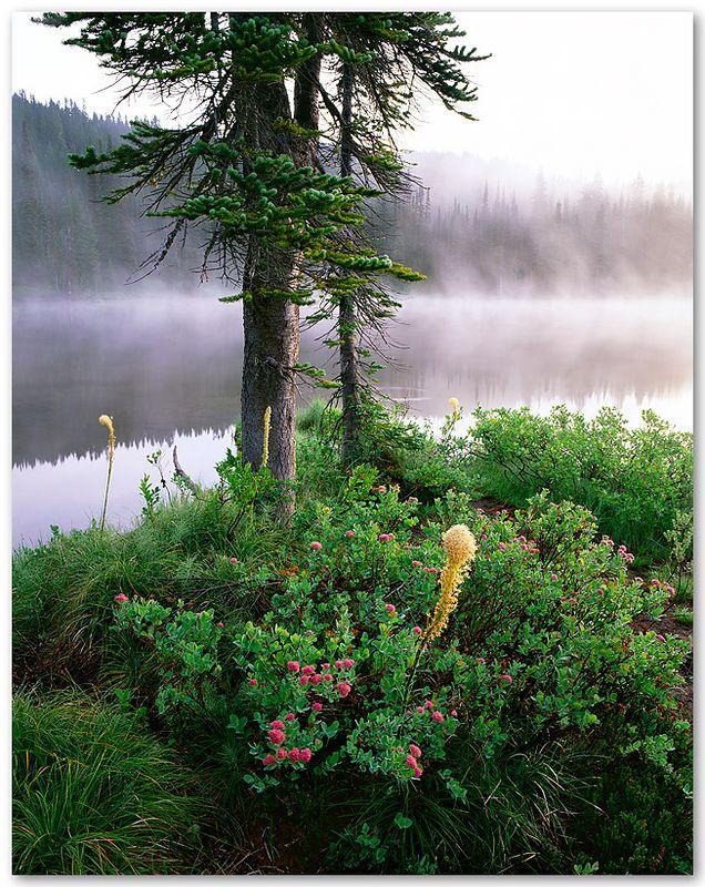 Rainier Mist