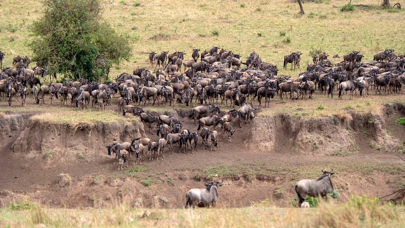 Tanzania-Serengeti-National-Park-Safari-Great-Migration-Wildebeest-02.jpg