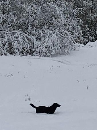 Snow 2019