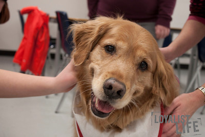 Random Acts of Kindness Week - Therapy Dogs